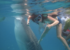 Swimming with the gentle giants in Santander